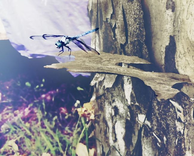 Dragonfly Watching Waiting Bark Wild Nature Nature Plant Day Invertebrate Insect Summer Road Tripping Beauty In Nature Outdoors Tree Growth