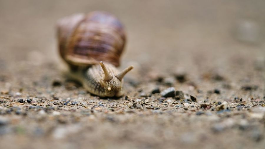 Close-up of snail on land