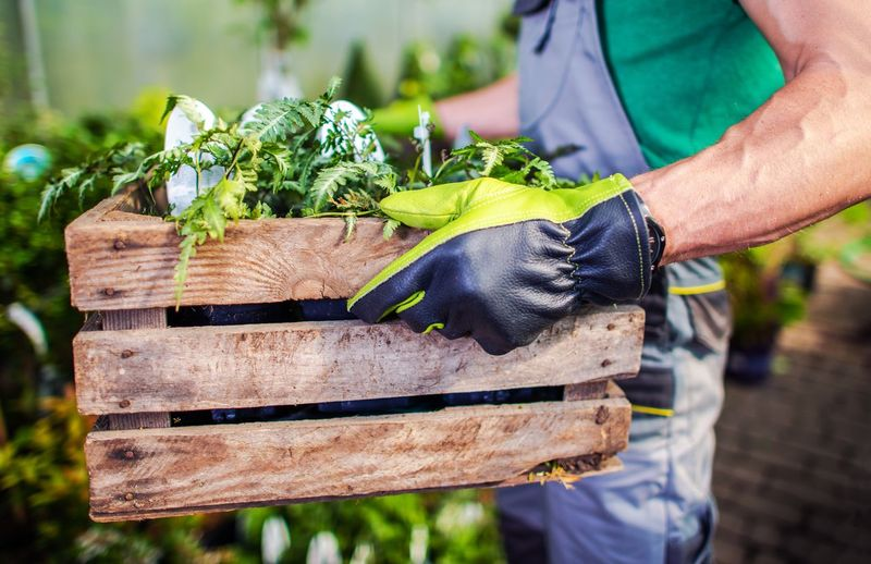 Midsection of man holding vegetables in crate at farm