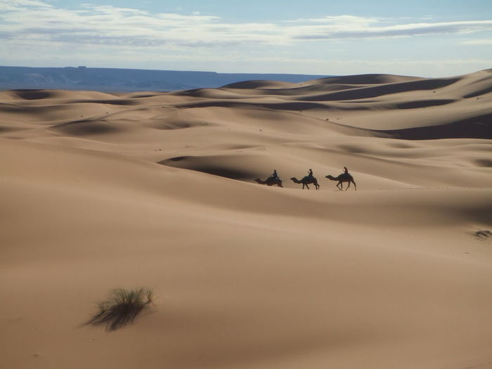 People Riding Camels At Sandy Desert Against Sky