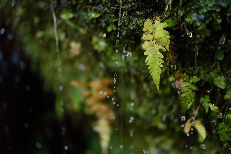 Gems Water Droplets EyeEm Best Shots - Macro / Up Close EyeEm Nature Lover Lovehappa TheMinimals (less Edit Juxt Photography) Getting Inspired Nikkor60mm Streamzoofamily