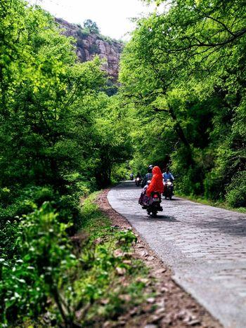 ranthambhour gaurav Tree Men Adventure Full Length Motorcycle Extreme Sports