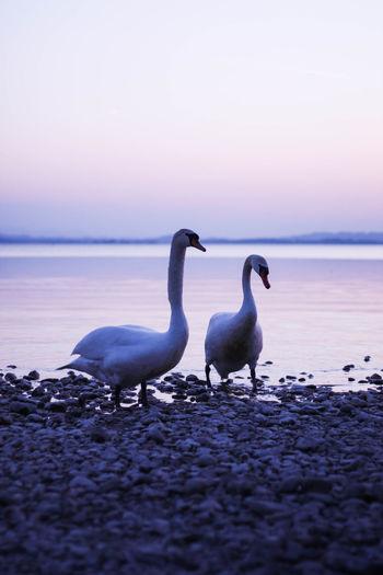 Seagulls on beach against sky during sunset