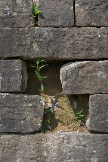 Close-up of small wall