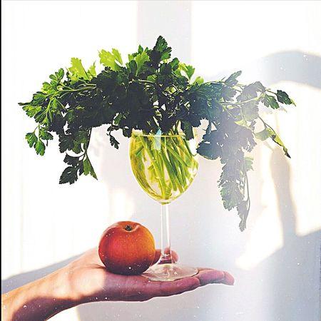 Sunset Sun Green Plants Apple First Eyeem Photo Hello World Екатеринбург Россия Mint By Motorola