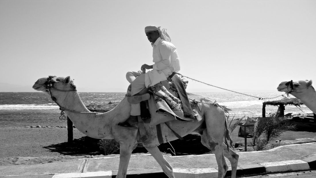 bedouin on his camel Beach Bedouin Blackandwhite Photography Camels Nature Outdoors People Portrait Sea Sharm El-Sheikh Street Photography Transportation Working Animal Travel Pictures EyeEmNewHere The Week On Eyem Welcome To Black
