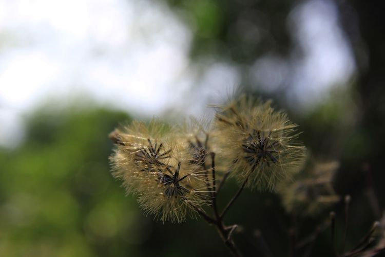 Beauty In Nature Close-up Day Fragility Growth Nature No People Outdoors Wilted Plant
