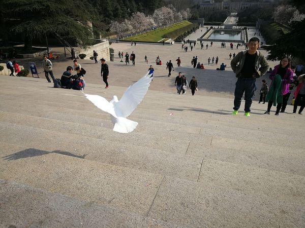 Bird in flight. Birds Huawei P10 Plus China Nanjing Animal Action Shot  Flying Wildlife