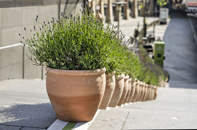 Close-up of potted plants in city
