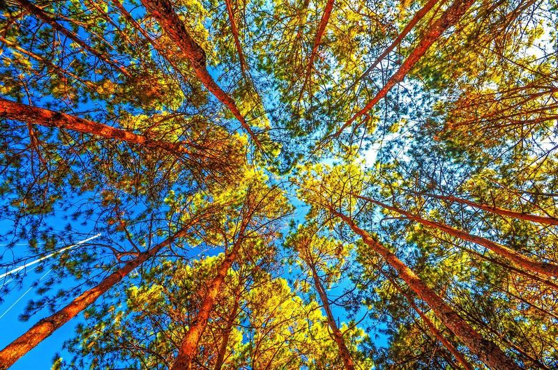 Tree background Full Frame Backgrounds Plant No People Low Angle View Tree Day Blue Natural Pattern Sunlight Nature Close-up Multi Colored Yellow Sky Pattern Beauty In Nature Growth Outdoors Branch