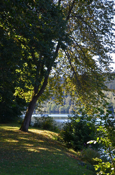 Beauty In Nature Germany Lake Landscape Listertalsperre Sauerland Tranquil Scene Tranquility Tree