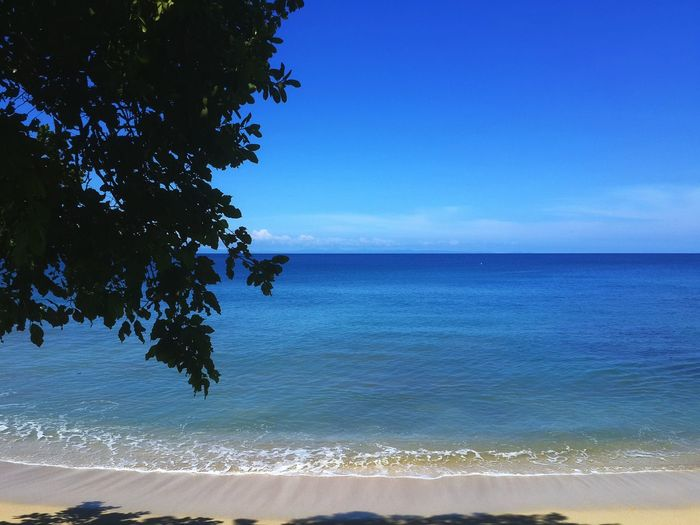 tropical beach Sea Beach Blue Water Tree Horizon Over Water Beauty In Nature Nature Sky Clear Sky Landscape