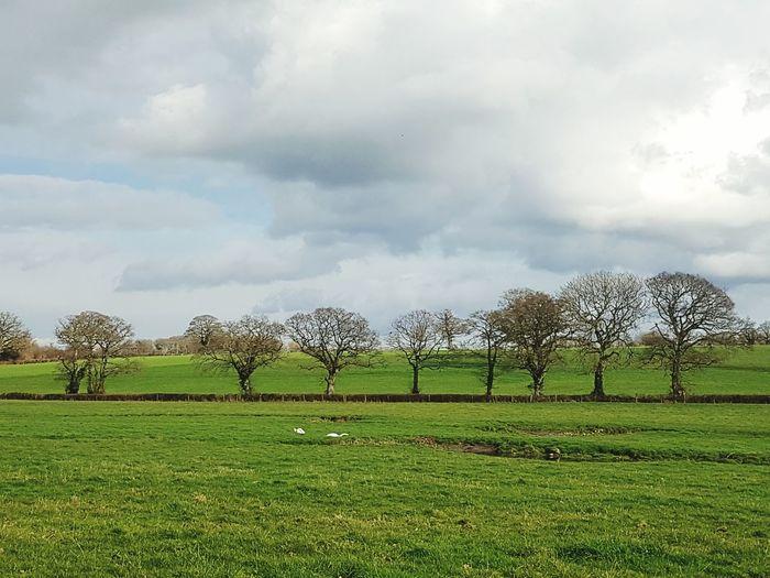 Cloud - Sky Grass Outdoors