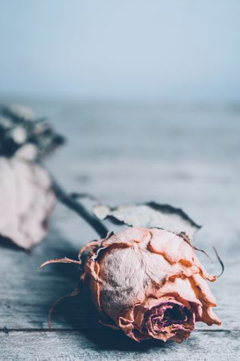 Close-up of dry rose in sea