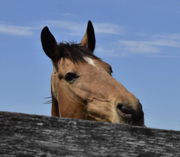 Close-up of a horse against the sky