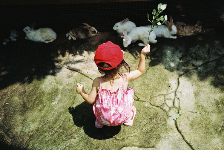 High angle view of girl playing with rabbits during sunny day