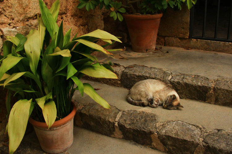 Cat sitting on a potted plant