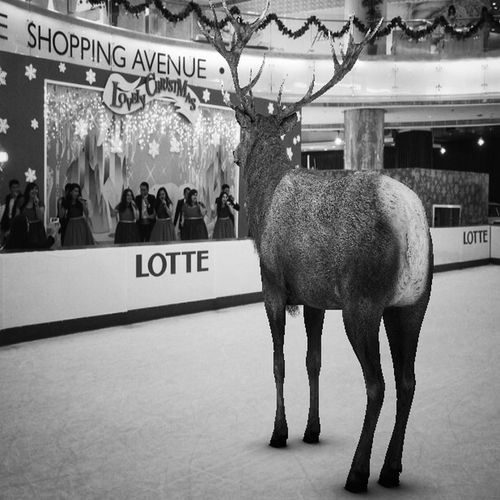 Tropical snow deer LMAO Iphonephotography EyeEm Iphoneonly IPhoneography Iphonesia Blackdrawing Taking Photo Absurd ArtWork Taking Photos Tropical Christmas Around The World
