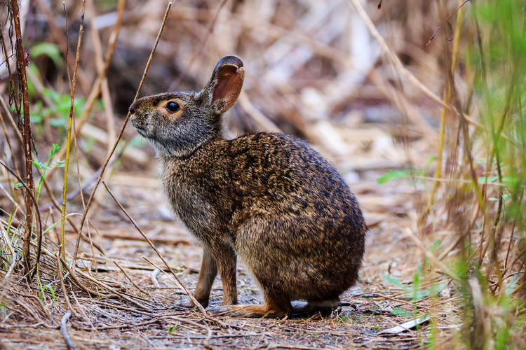 Animal Animal Themes Animal Wildlife Animals In The Wild Close-up Day Field Focus On Foreground Full Length Grass Land Looking Mammal Nature No People One Animal Outdoors Plant Rodent Vertebrate