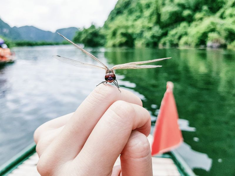 50+ Dragonfly - Insect Pictures HD   Download Authentic Images on EyeEm