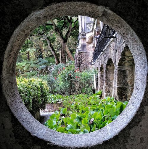 Plant Nature Day No People Water Outdoors Circle Architecture Wall Arch Geometric Shape Built Structure Shape Growth Tree Reflection Window Green Color Garden Well