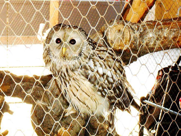 Owl Owls Beautiful Nature Animals Zoo Owls💕 Owl Eyes Owleyes Eyes Animal Photography EyeEm Animal Lover EyeEm Best Shots EyeEm Best Shots - Nature Nature Photography Beautiful Nature Nice Shot Photooftheday Bird Photography