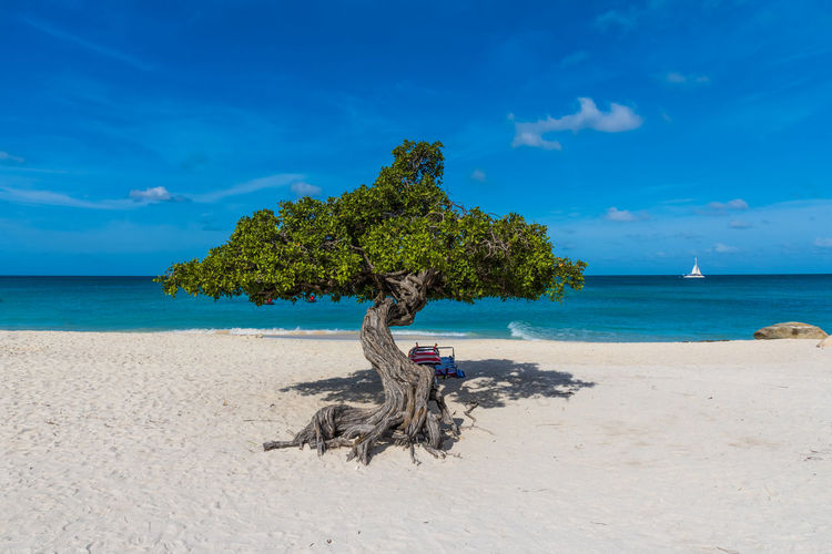 Beach Beauty In Nature Blue Caribbean Cloud - Sky Day Divi Tree Driftwood Eagle Beach Aruba Horizon Horizon Over Water Idyllic Land Nature No People Outdoors Plant Sand Scenics - Nature Sea Sky Tranquil Scene Tranquility Tree Tropical Water