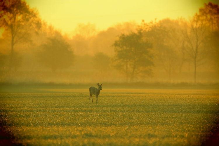 Gołębiowski Day Grass Nature One Animal Outdoors Sky Sunset First Eyeem Photo