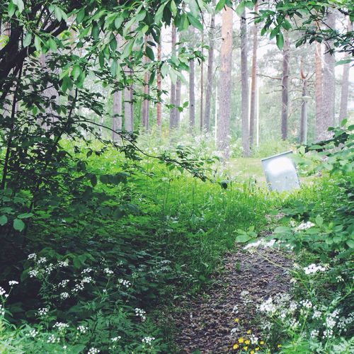 Out of place 🛀🏿 TheWeekOnEyeEM Outofplace Sweden Summer Forest Trees Nature Hidden Path Here Belongs To Me The Essence Of Summer