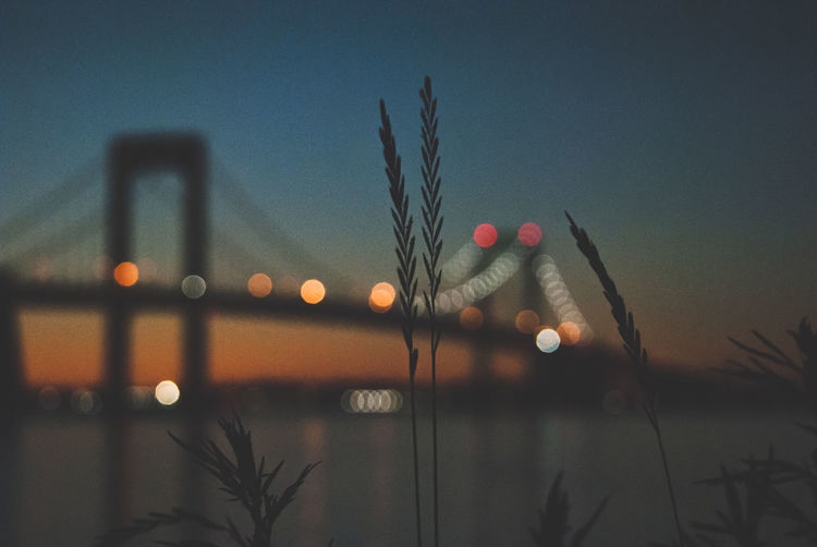 No People Sky Nature Dusk Built Structure Architecture Illuminated Transportation Water Bridge Connection Plant Bridge - Man Made Structure Outdoors River Sunset Night Beauty In Nature Building Exterior Skyscraper