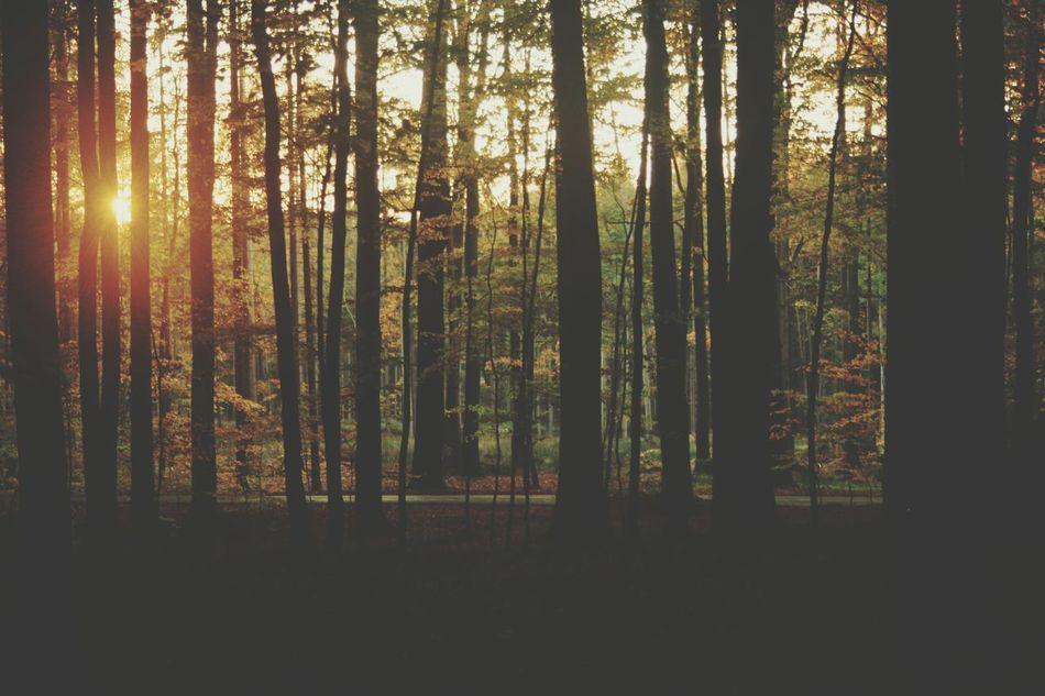 Forest Colors Of Autumn Sun Light w Zielony Las