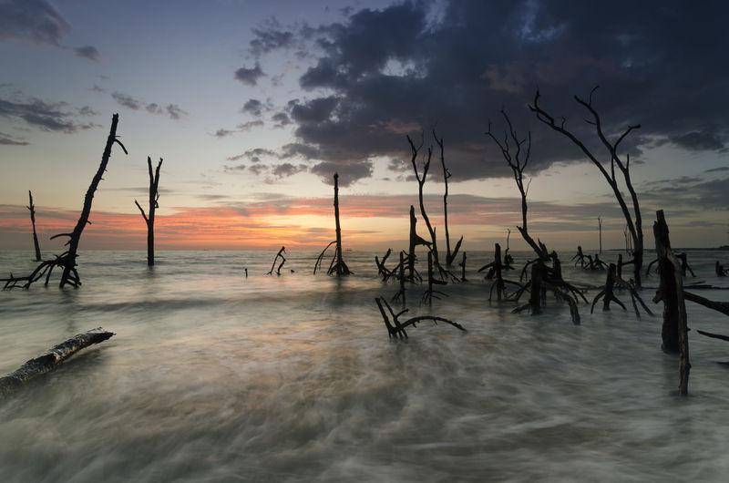 Dead mangroves along Kelanang Beach during sunset. Dead Tree Nature Seashore Beautiful Clouds Dead Forest Long Exposure Mangrove Mystery Mystical No People Outdoors Roots Of Tree Sea Seascape Spooky Stumps Trunk Tree Water