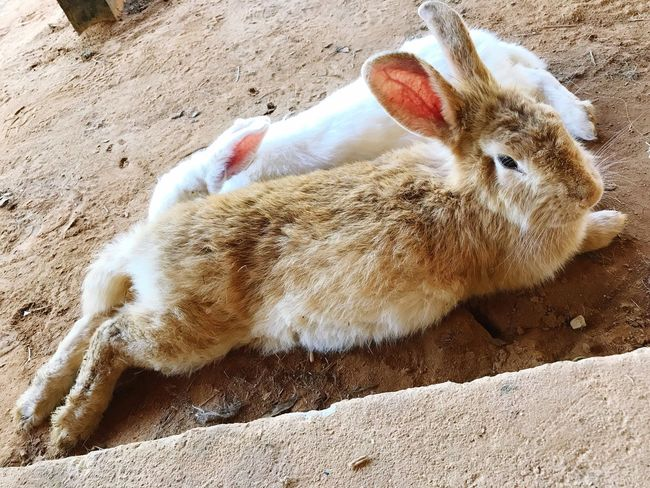 Bunny 🐰 Animal Themes Domestic Animals Day Pets Young Animal Animals In The Wild Close-up