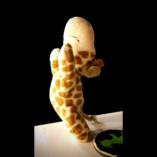 Giraffe Black Background No People Animal Jirafa Spielzeug Kuscheltier Hängen Außergewöhnlich Giraffe Hängt Siegerpose Winner Triumph