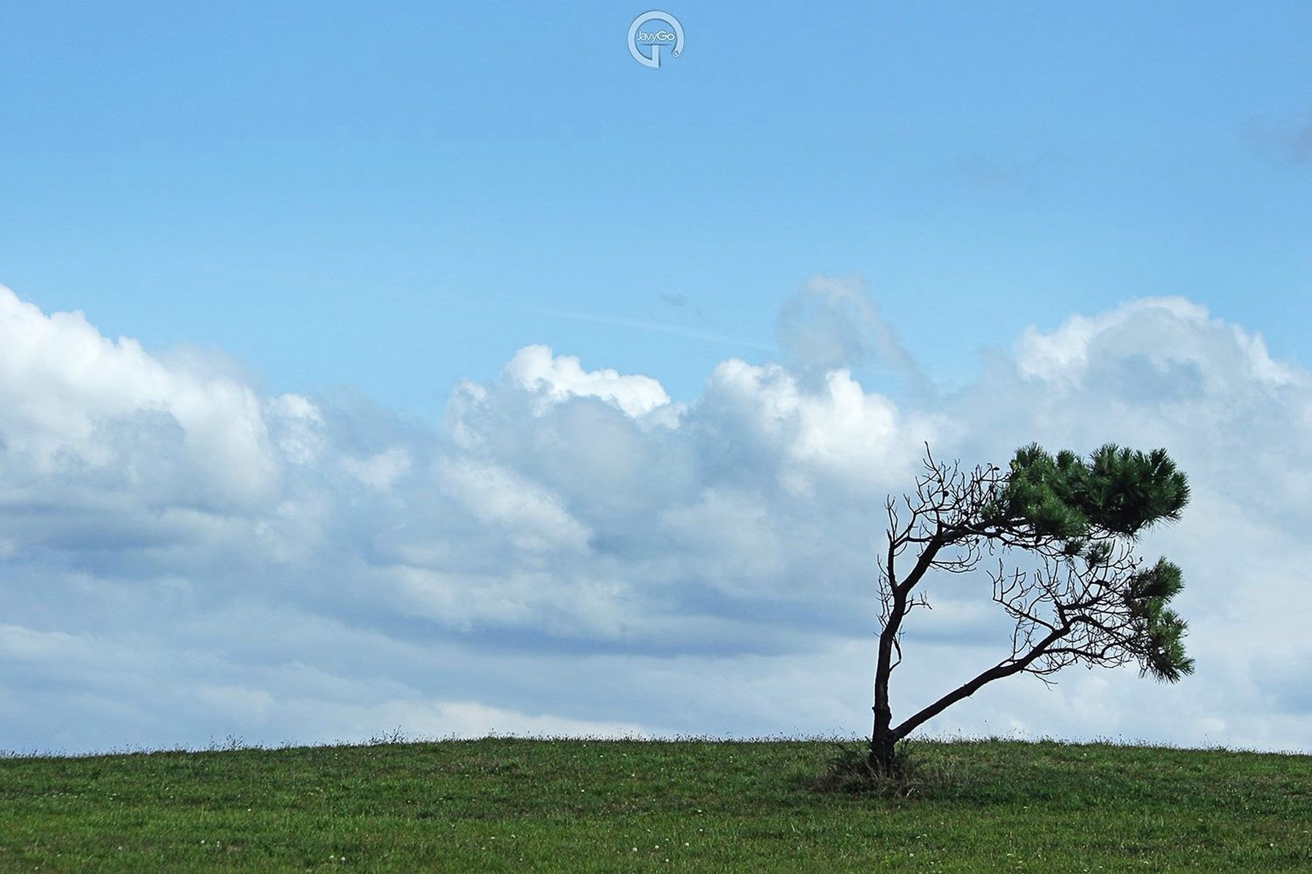 sky, blue, cloud - sky, tranquility, low angle view, nature, tree, cloud, tranquil scene, beauty in nature, scenics, growth, field, day, transportation, green color, outdoors, landscape, no people, grass