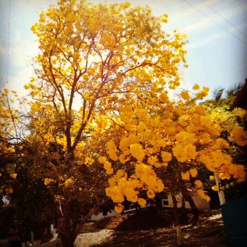 Papai do Céu é tão perfeito! Deuséperfeitod + Nature Beautiful