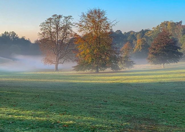 Misty Autumn Morning Morning Park EyeEmNewHere Trees Mist Misty Morning Plant Tree Beauty In Nature Nature Tranquil Scene Tranquility Green Color No People Field Scenics - Nature Landscape Day Outdoors