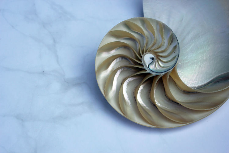 High angle view of shell on white table