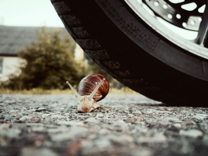 Tire Asphalt