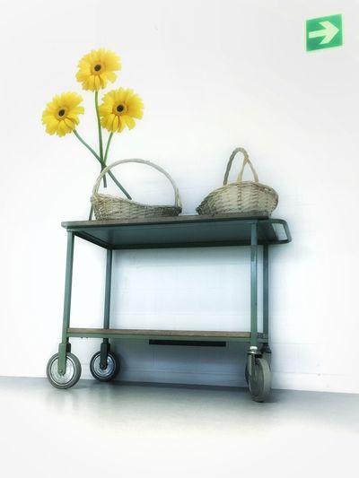 Blumenwaagen Kantine Wandbild Blumen Körbe Basket EyeEm Selects Flower White Background Yellow Indoors  No People Freshness EyeEmNewHere