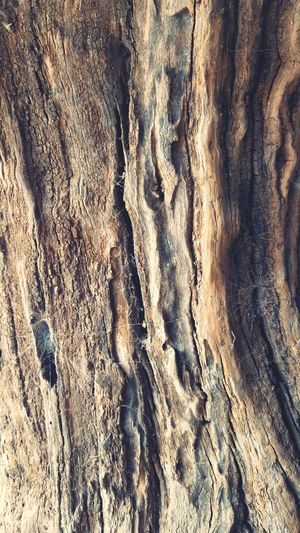 old tree Old Tree Trunk Trunk Tree Trunk Detail Trunkofwood Trunk Texture Tree Stump Tree Art Trees Collection Wood - Material Wooden Texture EyeEm Best Shots EyeEmNewHere EyeEm Nature Lover EyeEm Gallery Eye4photography  EyeEm Selects EyeEmBestPics Backgrounds Full Frame Textured  Sand Pattern Textile Beach Rough High Angle View Fabric