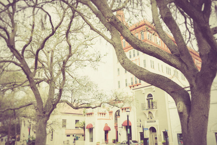 Urban Nature Architecture Bare Tree Branch Building Exterior Built Structure City Day Florida House Nature No People Old City Outdoors Residential Building Sky Street Photography Tree Tree Trunk Urban Landscape Vintage