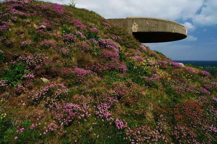 Brittany Many Colours Of Nature Architecture Beauty In Nature Blockhaus Built Structure Flowers No People Seaside