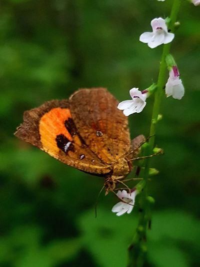 wild flower &