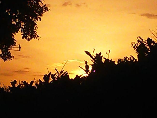 sunset this evening 💕💕💕 Tree Sunset Palm Tree Tree Area Silhouette Sky Landscape