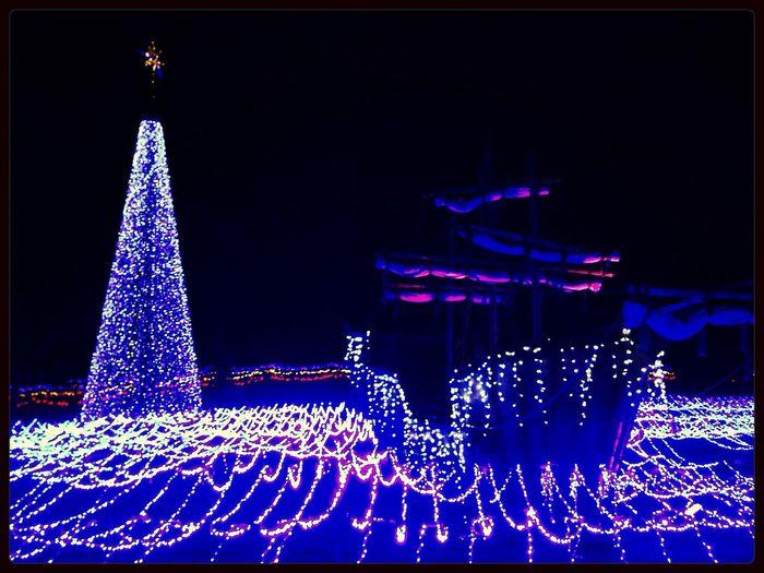 Pirate Ship Shining Tree Illumination Enjoying Life