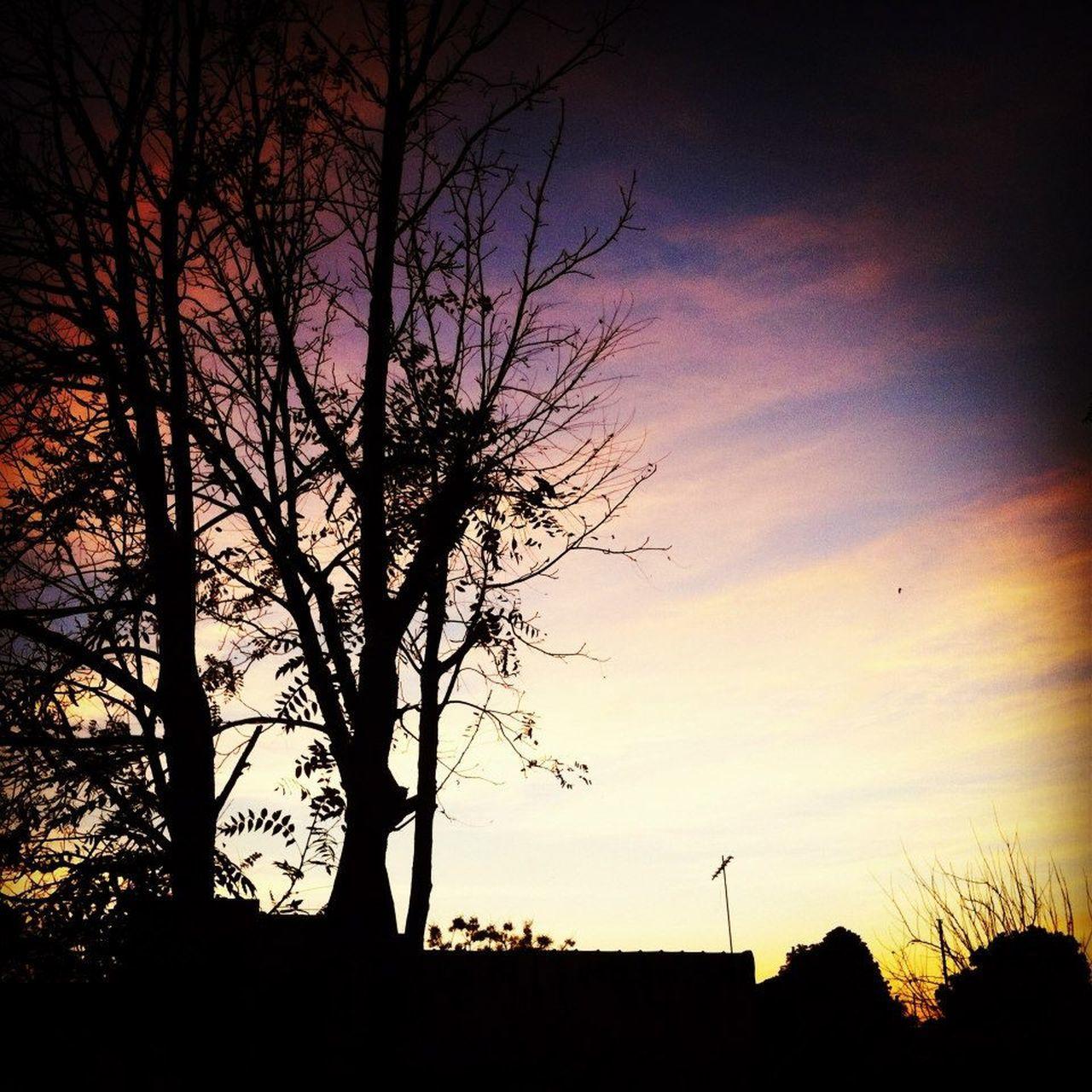 SILHOUETTE TREES ON LANDSCAPE AGAINST SUNSET