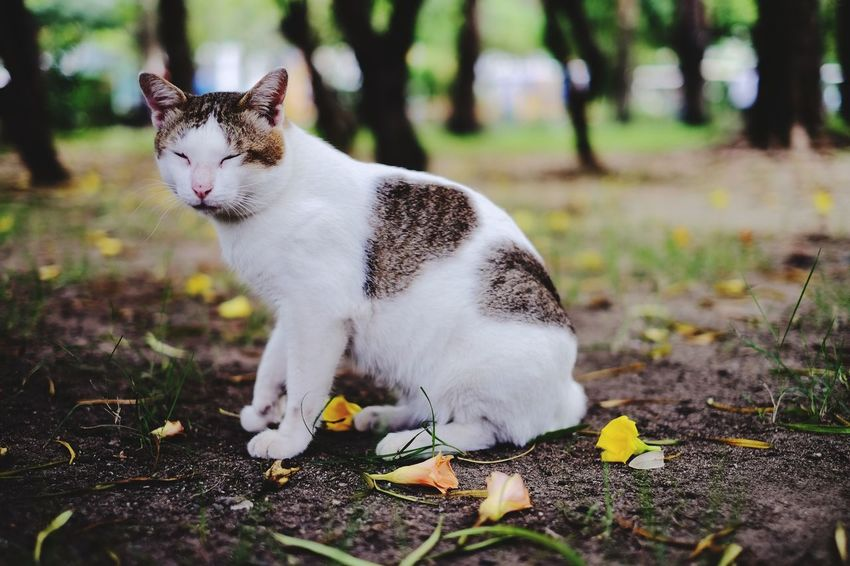 Meaw Meaw One Animal Animal Pets Domestic Cat Mammal Feline Domestic Animals Animal Themes Nature No People Outdoors Animal Wildlife Close-up Nature Day Beauty Cat Cat Photography Cat In Nature