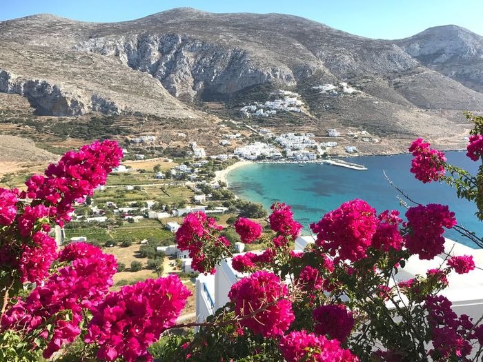 Aegiali, Amorgos Mountain Flower Nature Beauty In Nature Scenics Cyclades Greekislands Aegiali Amorgos Greece Tranquility Outdoors Day Water Mountain Range No People Tranquility Lake Tranquil Scene Plant Travel Destinations Landscape Sky Freshness Flower Head