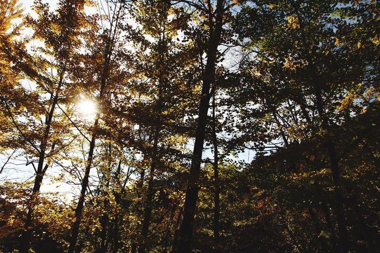 山梨県 甲府市 昇仙峡 Japan Yamanashi Kōfu-shi Nature Tree Forest Mountain Sun